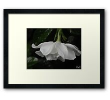 Wet Flower Framed Print