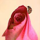 Ladybloom by Bronwyn Bruce