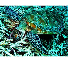 Munching on the Reef, Cairns, QLD Australia Photographic Print