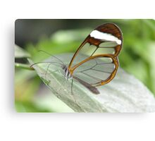 GRETA OTO  GLASSWING BUTTERFLY Canvas Print