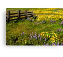 Wildflower meadow In the Columbia Gorge Canvas Print