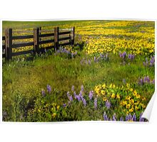 Wildflower meadow In the Columbia Gorge Poster
