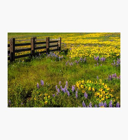Wildflower meadow In the Columbia Gorge Photographic Print