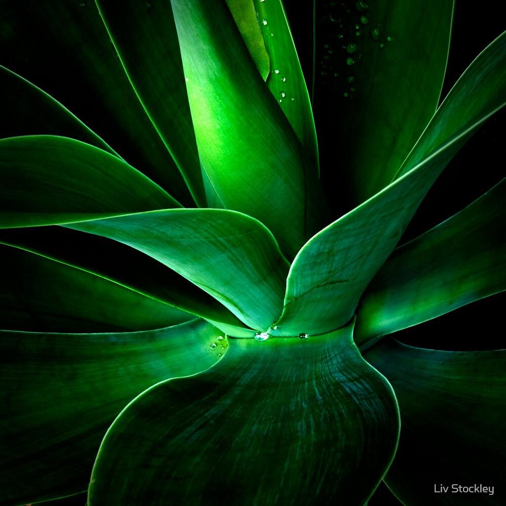 Aloe Vera by Liv Stockley