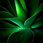 Aloe Vera by Liv Stockley