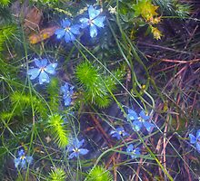 Roseville Bushland Series: Tangles, Dew and Blue. by Alison Lee Cousland