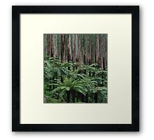 Fern Soldiers of the Forest  Framed Print