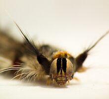 Hairy Caterpillar - macro by kutayk