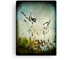 Solitary... Canvas Print