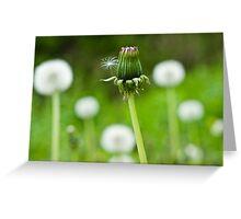 Dandelion Bokeh Greeting Card