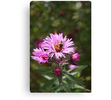 Bee on a Daisy Canvas Print