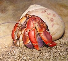 Hermit Crab Drawing by CATStudiosArt