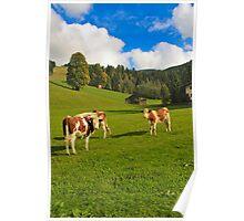 Austrian cows in an Austrian meadow Poster