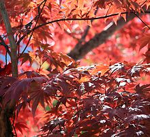 Autumnal leaves by Sue Leonard