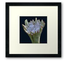 First snow in a lichen cup, here you are! Framed Print