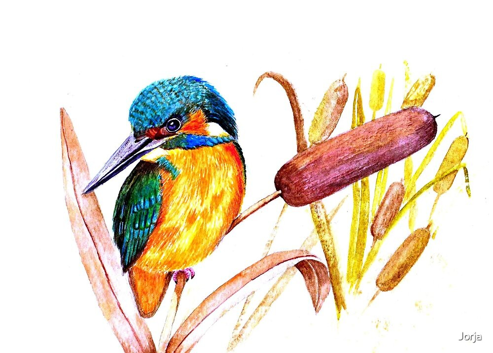 Kingfisher by Jorja