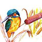 Kingfisher by Jorja