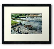 The Patterdale Terrier Framed Print