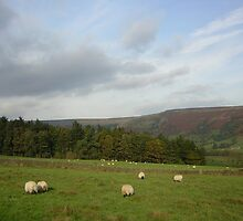 Sheep May Safely Graze by Janet Watson