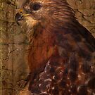 Ponce Inlet Hawk by Deborah  Benoit