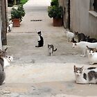 Lots of cats in Erice  by Asanova