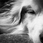 Resting  by Karen Havenaar