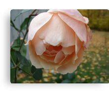 Fallen Peach Canvas Print