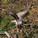 Eagle Owl 2 by Peter Barrett