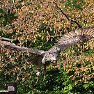 Eagle Owl 3 by Peter Barrett