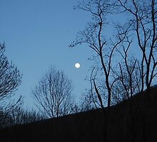 Moonlit Night - Jefferson National Forest - VA by Patti Warren