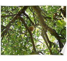 apple tree in sunlight Poster