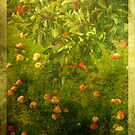 Orchard Tapestry #2 by ©FoxfireGallery / FloorOne Photography