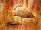 Flamingo by CarolM