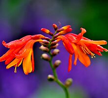 RICHNESS IN COLOUR by RoseMarie747