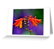 RICHNESS IN COLOUR Greeting Card