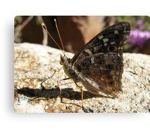 Butterfly ~ Empress Leilia Canvas Print