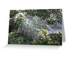 Sunlit Spider Web Greeting Card