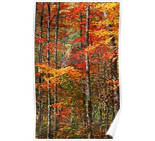 HARDWOOD FOREST, AUTUMN Poster