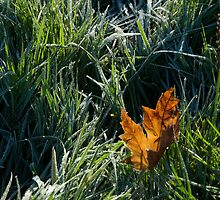 Leaf in frosty grass by StephenRB
