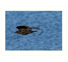 Black Bird against Blue Water Art Print
