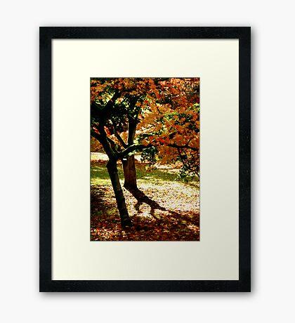 Light & Shade Framed Print