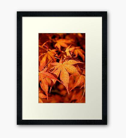 Burn and Rave at Close of Day Framed Print