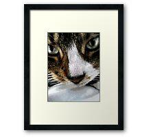 Close-up Tabby Framed Print