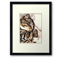 Sleeping Tabby Framed Print
