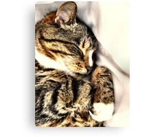 Sleeping Tabby Canvas Print