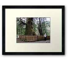 The Biggest Spruce Tree Framed Print
