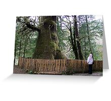 The Biggest Spruce Tree Greeting Card