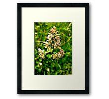 Pretty Plant Framed Print