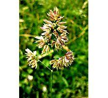 Pretty Plant Photographic Print
