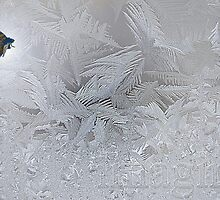 Frosty Dreams by Lisa Knechtel